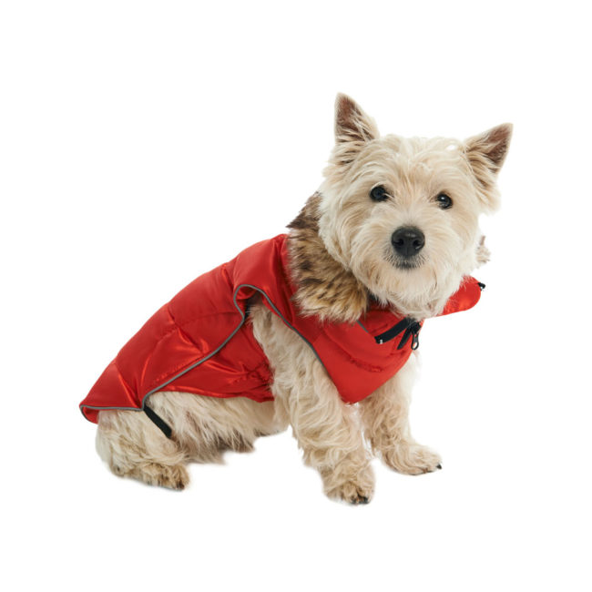 BUSTER Active Winter Dog Coat High Risk Red Small/Medium 2