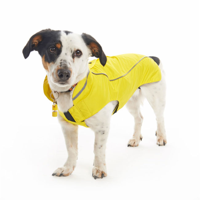 BUSTER Classic Dog Raincoat Lemon Large 2