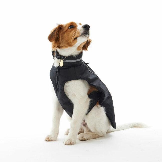 BUSTER Classic Softshell Dog Coat Blackberry Large 2
