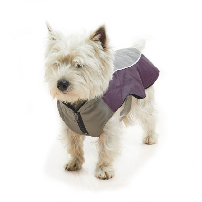 BUSTER Classic Winter Dog Coat Steel Grey/Black Plum Large 2