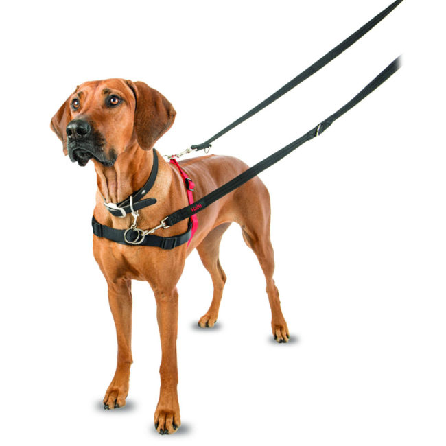 Halti Front Control Dog Harness Black/Red Medium 1