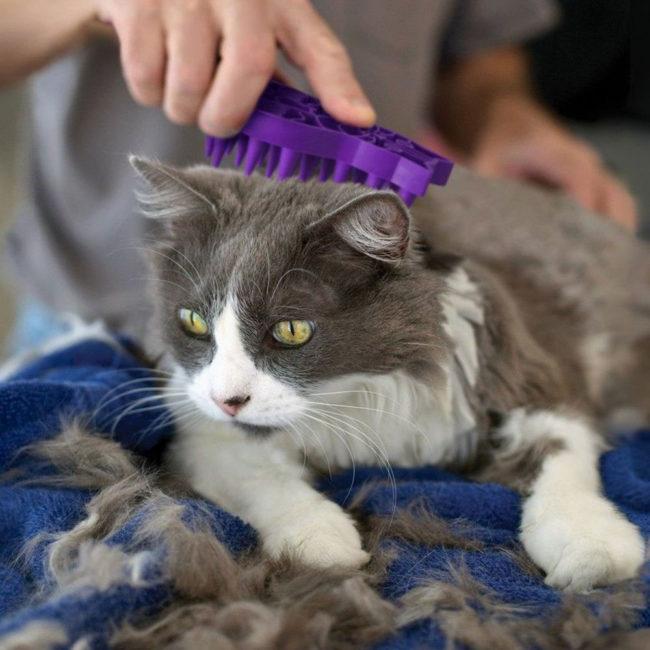 KONG ZoomGroom Cat Grooming Brush 2